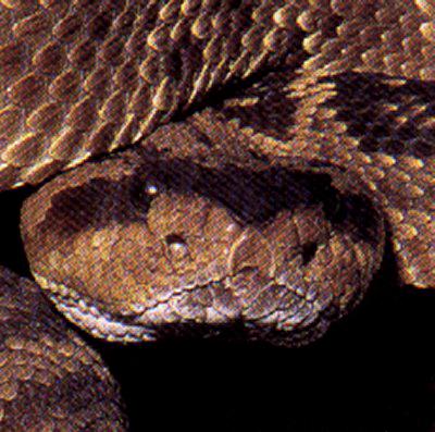 The Reptipage Serpent Senses
