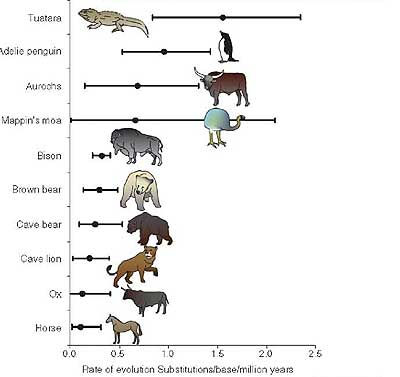 Tuatara evolution rate