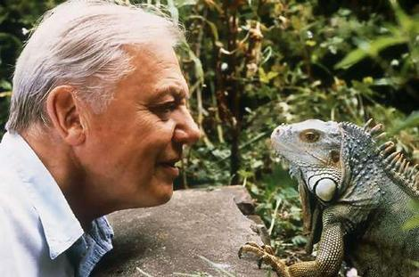 David Attenborough doing what he does best.