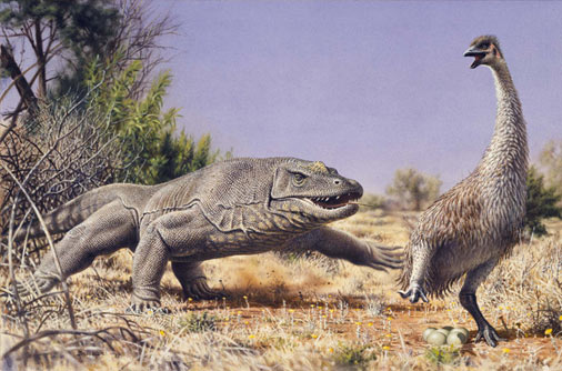 Megalania chasing down Genyornis newtoni. Illustration by Peter Trusler for Wildlife of Gondwana