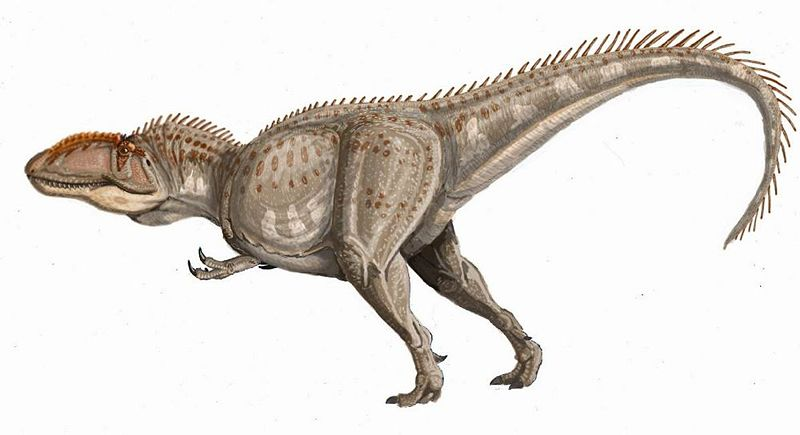 Giganotosaurus carolinii pic, like most, from Wikipedia
