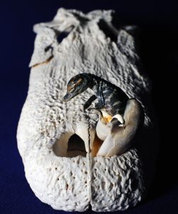 A stillborn hatchling rests inside the left nostril of a large 3.7m (12ft) adult which is some 5000 times larger!