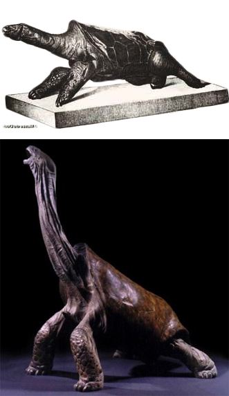 "Mascarenes ""racing"" tortoises as reconstructed in the 18th century (top) vs. the 21st century (Bottom). Top image from the Muséum National d'Histoire Naturelle in Paris. Bottom image from Pangolin Editions."