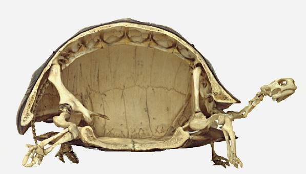 turtle_side_view1