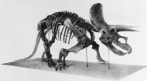 Triceratops pic from britannica.com, but originally from: Mounted Skeleton of Triceratops elatus? by Henry Fairfield Osborn, American Museum Novitiates, Sept. 6, 1933