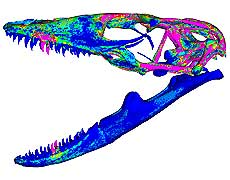 Komodo dragon FE skull made by the Computation Biomechanics Research Group. UNSW, Sydney Australia.