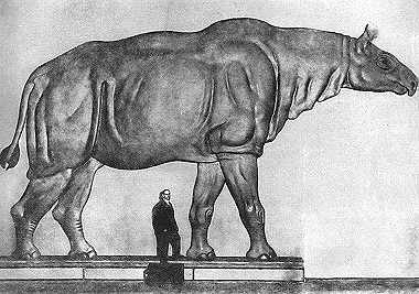 The largest mammal known to have ever existed: Paraceratherium. Image from Wikipedia