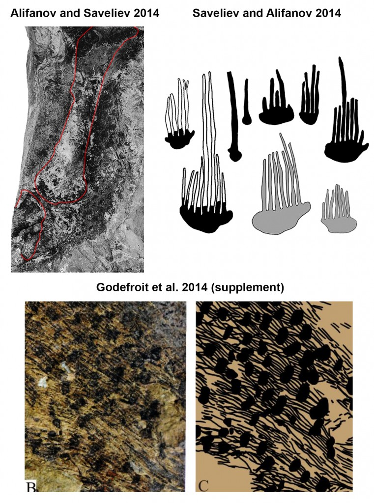 Interpretations of these compound filamentous structures. Images adapted from plate XI-4 of Alifanov and Saveliev 2014 (top left), figure 1 of Saveliev and Alifanov 2014 (top right), and figure S9-B, C of Godefroit et al. 2014.