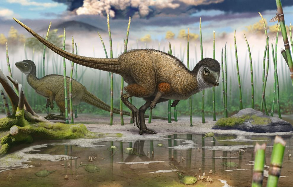 Artist's impression of the fleshed out Kulinda specimen. Image by Andrey Atuchin