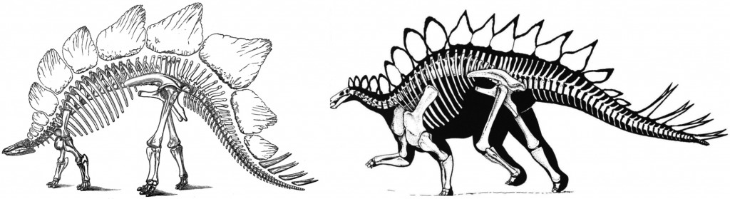 Original interpretations of Stegosaurus tail orientation (Marsh 1877). Dinosaur Renaissance interpretation (Bakker 1986).