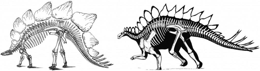 Original interpretations of Stegosaurus tail orientation (Marsh 1877). Dinosaur Renaissance interpretation (Bakker 1986).