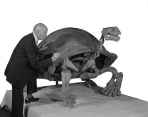 Reconstructed skeleton of M. atlas with its discoverer, Barnum Brown (1931)