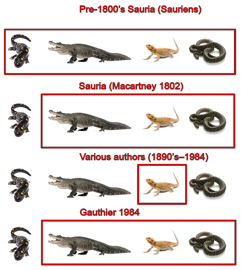 Modern-day paleo myths: Dinosaurs as lizards – THE REPTIPAGE